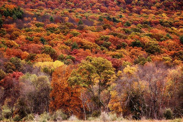 Photograph - Below The Ridge by Dawn J Benko