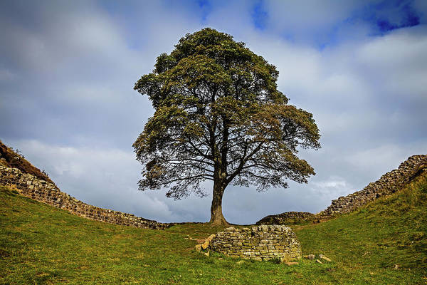 Hadrians Wall Photograph - Below Winshields Is The Sycamore Gap by Panoramic Images