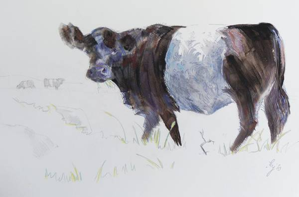 Drawing - Belted Galloway Cow Illustration by Mike Jory