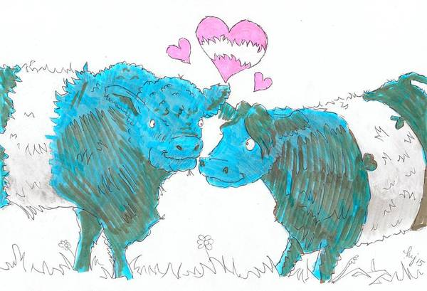 Drawing - Belted Galloway Cows Cartoon by Mike Jory