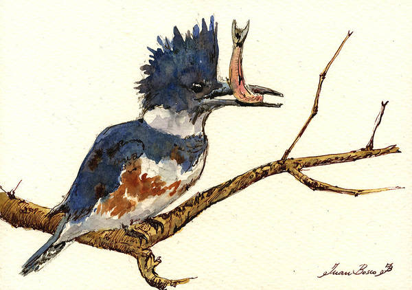 Natur Wall Art - Painting - Belted Kingfisher Bird by Juan  Bosco