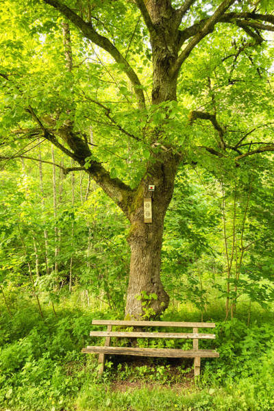Photograph - Bench And Tree In Spring Wonderful Green Colors by Matthias Hauser