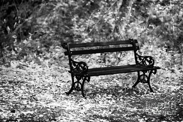 Photograph - Bench At Charles Town by John Rizzuto