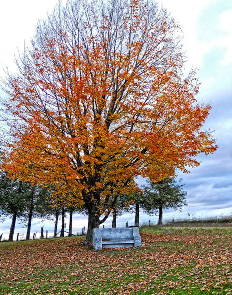 Photograph - Bench Grave In Fall by Maggy Marsh
