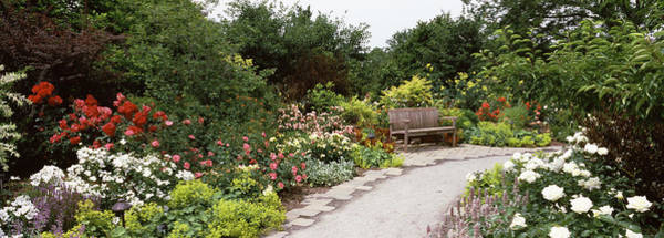 Wall Art - Photograph - Bench In A Garden, Olbrich Botanical by Panoramic Images