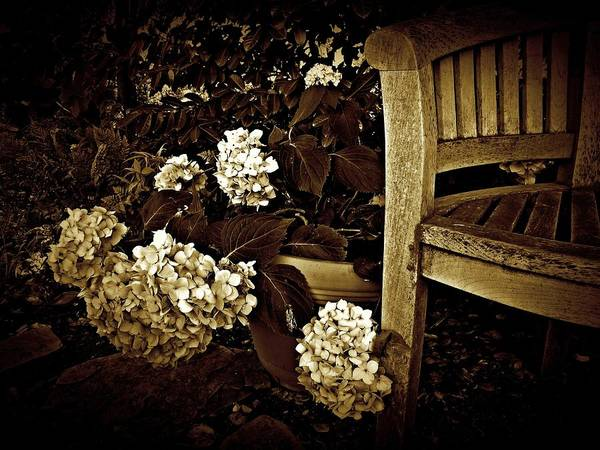 Photograph - Bench With Hydrangeas by Patricia Strand