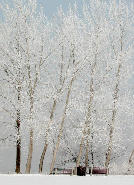 Benches And Hoar Frost Trees Art Print