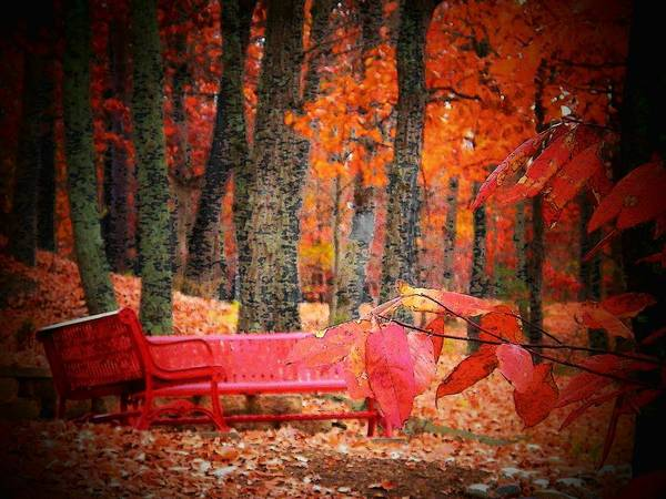 Wall Art - Photograph - Benches In The Park by Joyce Kimble Smith