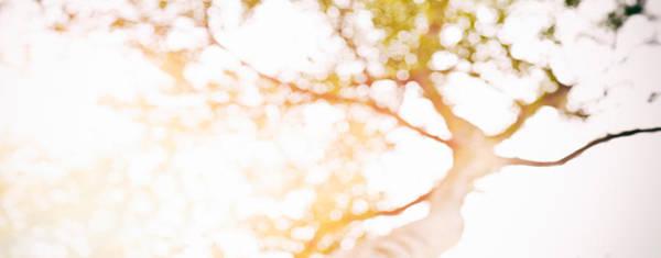 Photograph - Beneath A Tree 14 4945 Panorama by U Schade