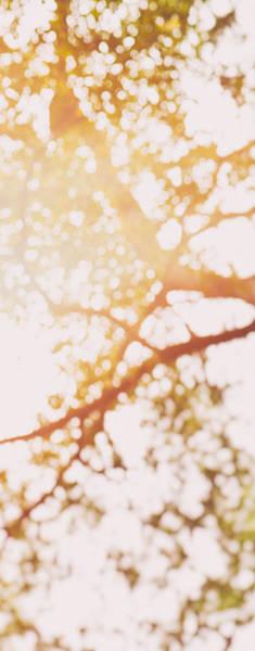 Photograph - Beneath A Tree 14 4948 Triptych Set 2 Of 3 by U Schade
