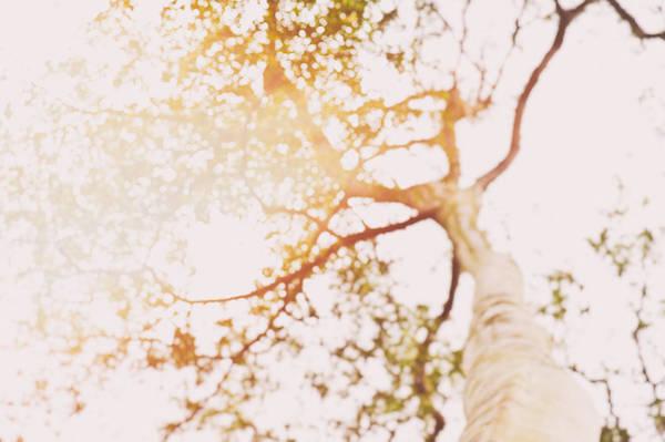 Photograph - Beneath A Tree 14 4948 by U Schade