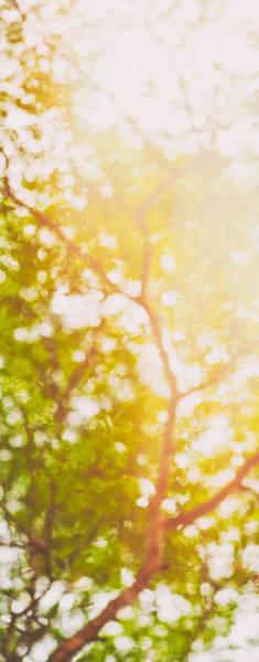 Photograph - Beneath A Tree  14 5199   Diptych  Set 1 Of 2 by U Schade
