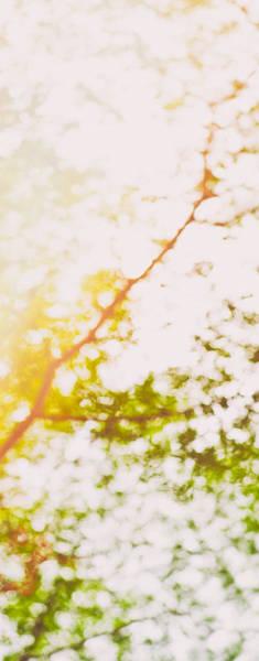 Photograph - Beneath A Tree  14 5199  Diptych  Set 2 Of 2 by U Schade