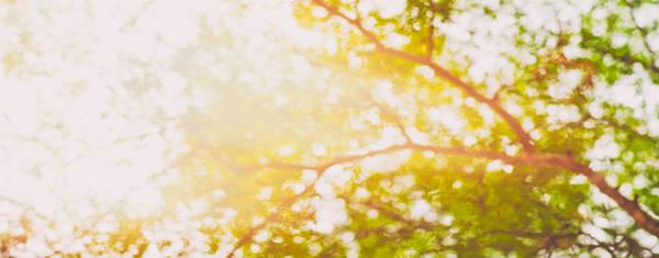 Photograph - Beneath A Tree 14 5199 Panorama by U Schade