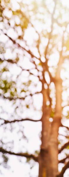 Photograph - Beneath A Tree 14 5286 Triptych Set 1 Of 3 by U Schade