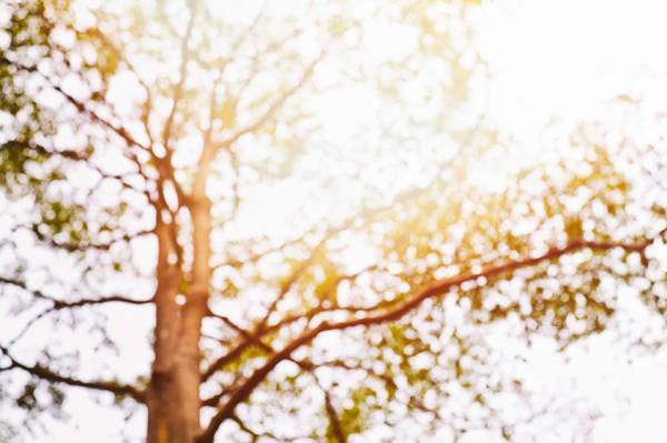 Photograph - Beneath A Tree 14 5286 by U Schade