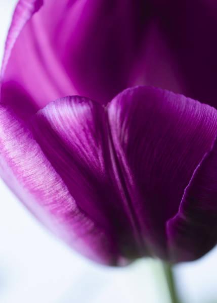 Photograph - Beneath The Fold by Christi Kraft