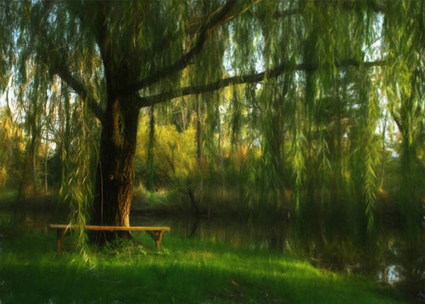 Wall Art - Photograph - Beneath The Willow by Lori Deiter