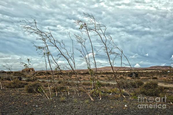Lanzarote Digital Art - Bent Plants In The Wind by Patricia Hofmeester