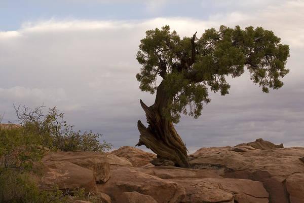 Photograph - Bent Tree by Darryl Wilkinson