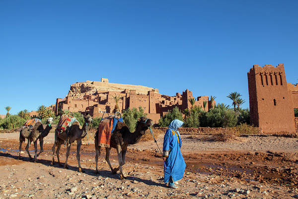 Berber Wall Art - Photograph - Berber Camel Driver In Front Of Ait by Douglas Pearson