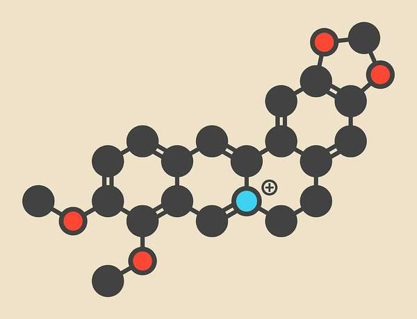Wall Art - Photograph - Berberine Herbal Medicine Molecule by Molekuul/science Photo Library