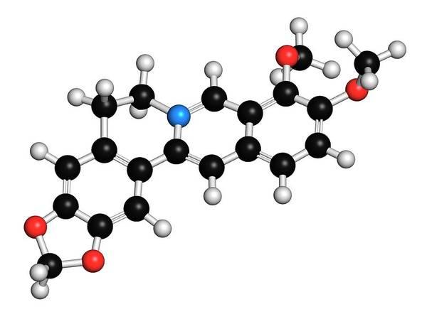 Wall Art - Photograph - Berberine Medicine Molecule by Molekuul/science Photo Library