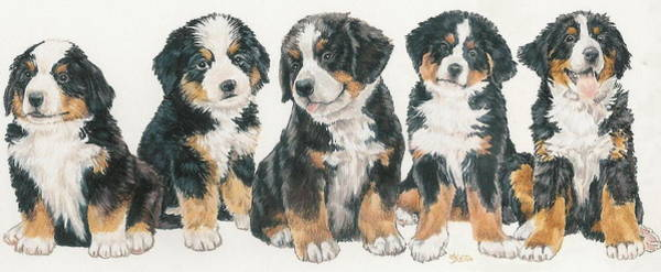 Wall Art - Mixed Media - Bernese Mountain Dog Puppies by Barbara Keith