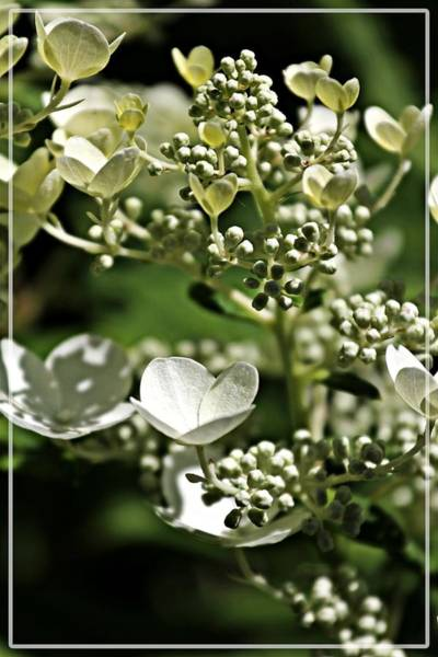 Photograph - Berries And Blooms In Monochromatic Green by Jp Grace