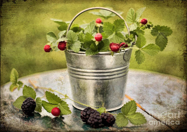 Bilberry Photograph - Berries by Darren Fisher