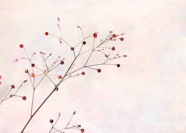 Photograph - Berries On A Branch by Sabrina L Ryan