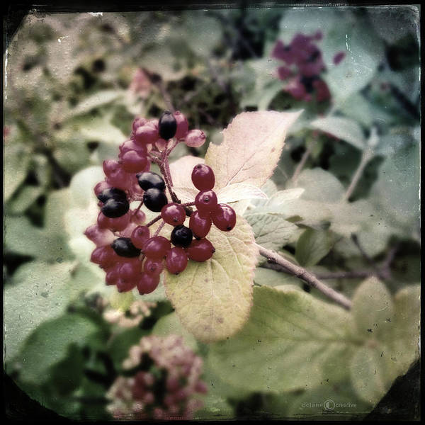 Photograph - Berries by Tim Nyberg