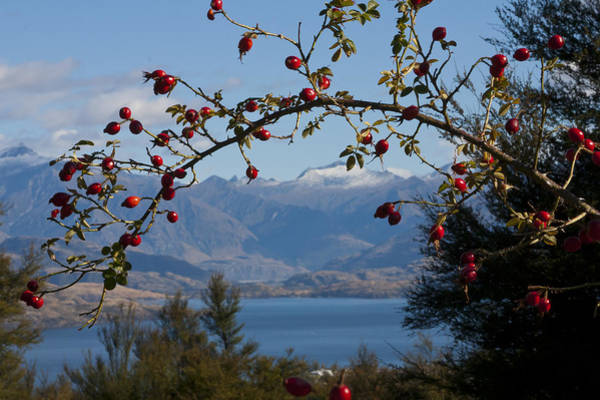 Photograph - Berry Good View by Jenny Setchell