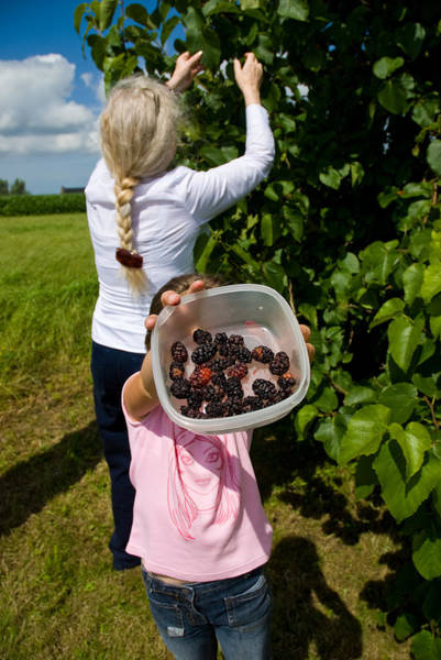 Photograph - Berry Nice by Paul Indigo