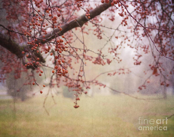 Photograph - Berry Tree by Pam  Holdsworth