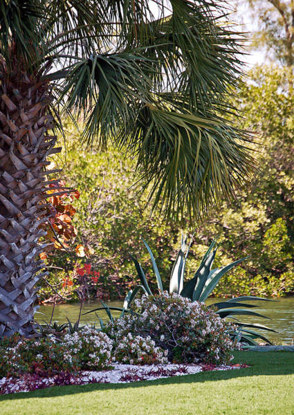 Photograph - Beside A Lazy River by Donna Proctor