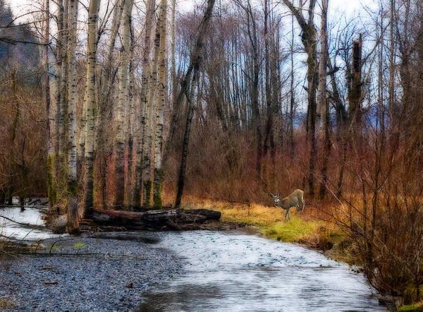 Photograph - Deer Watches Near Multnomah Falls by Ginger Wakem