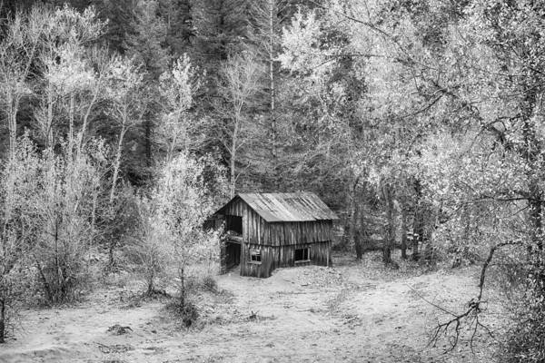 Photograph - Better Days In Black And White by James BO Insogna
