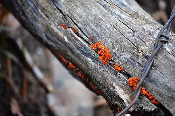 Between The Trees Photograph - Between The Cracks by Matthew Blum