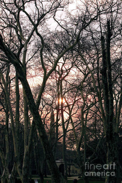 Between The Trees Photograph - Between The Trees by John Rizzuto