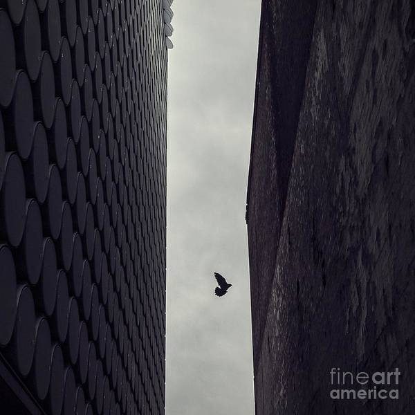 Wall Art - Photograph - Between Worlds by Andrew Paranavitana