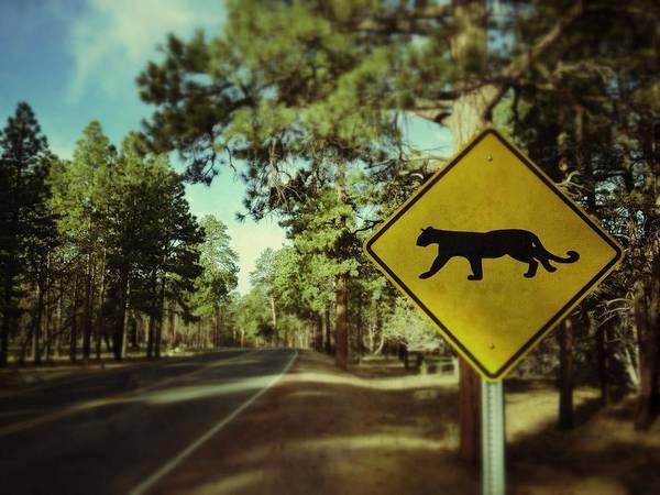 Placard Photograph - Beware by Adam Schmid