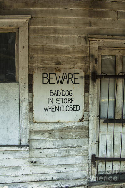 Photograph - Beware Bad Dog by Terry Rowe