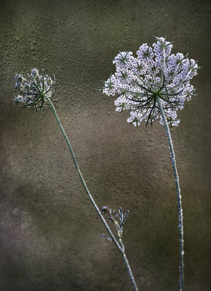 Photograph - Beyond The Dew by Dale Kincaid