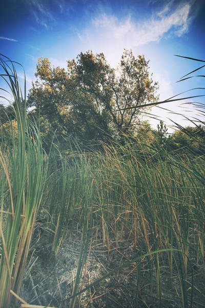 Wall Art - Photograph - Beyond The Grass by Laurie Search