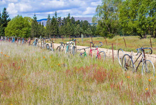 Photograph - Bicycle Graveyard by Nicholas Blackwell