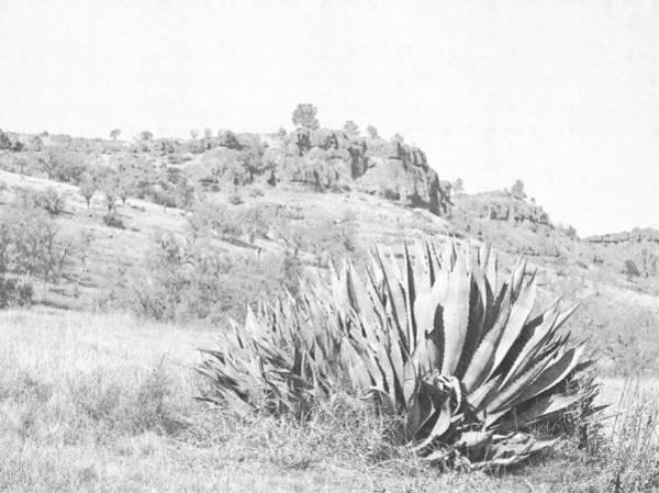 Photograph - Bidwell Park Cactus by Frank Wilson