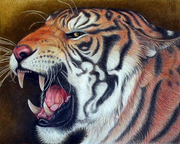 Bengal Tiger Drawing - Big Ben by Jo Prevost