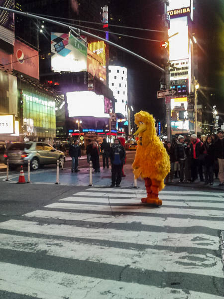 Photograph - Big Bird On Times Square by Scott Campbell