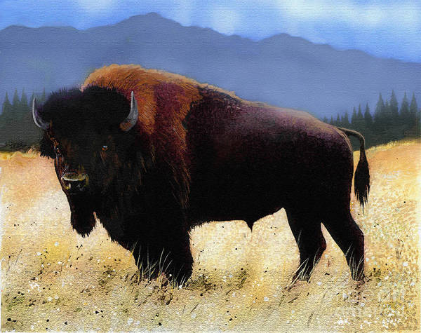 North American Wildlife Wall Art - Painting - Big Bison by Robert Foster